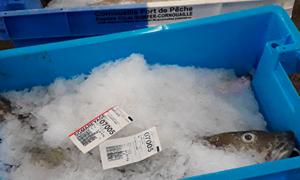 CCIMBO - AMO pour la traçabilité (RFID) des contenants des ports de criées de Cornouaille